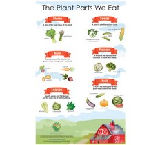 Seed Soil Sun Companion Poster - The Plant Parts We Eat